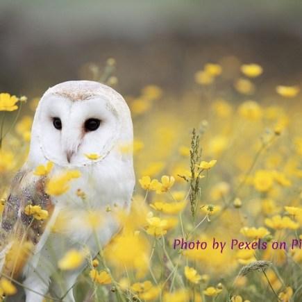Wise owl in field of wildflowers