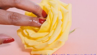 Woman's fingers in the center of a rose