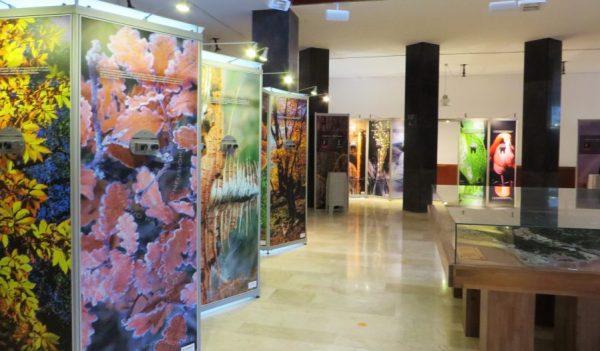 Exposición sobre los bosques en el centro de interpretación
