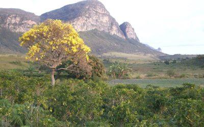 FLORES DE LA CHAPADA