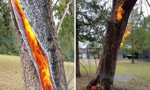 Tronco de árvore queima internamente depois de ser atingido por um raio