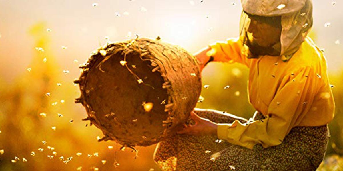 Crítica | Honeyland – Entre abelhas e mel