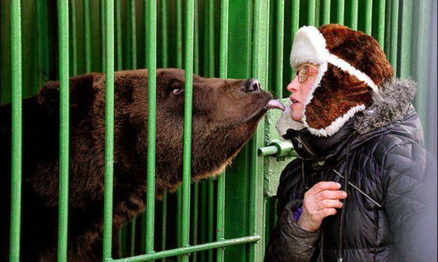Guardiã de zoológico, que perdeu a perna para uma ursa, implora para que o animal seja perdoado