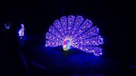 Magical Lantern Festival