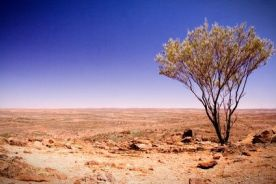 article-new-ehow-images-a06-d1-pp-plants-great-victoria-desert-1.1-800x800