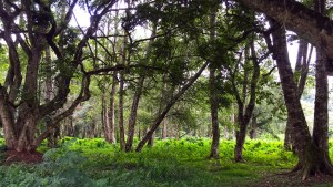 How Green Is The Forest
