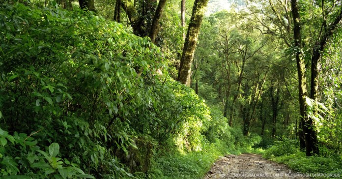 Forest trails everywhere in Nagaland