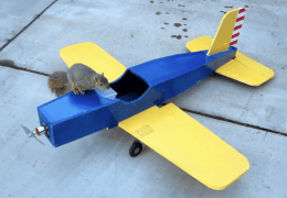 Squirrel caught while stealing plane