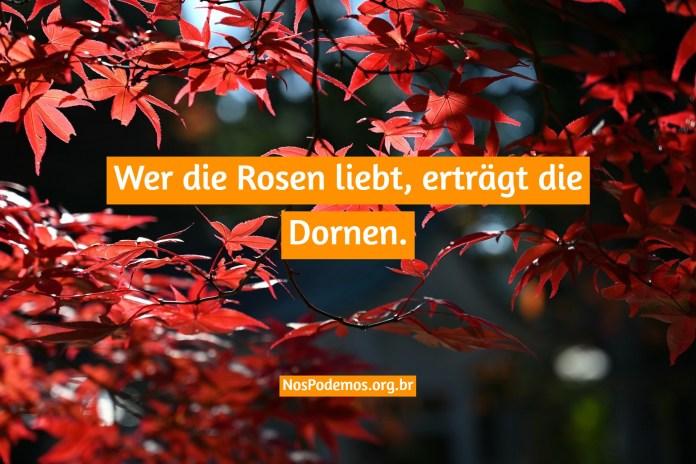 Wer die Rosen liebt, erträgt die Dornen.