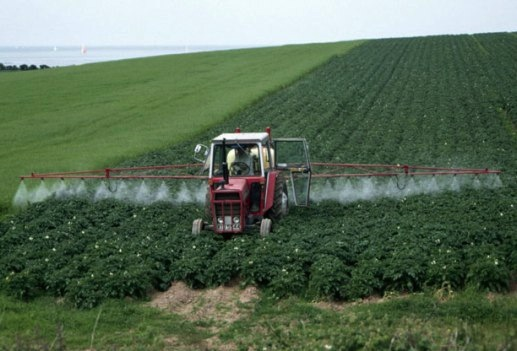 Spraying Glyphosate / Roundup