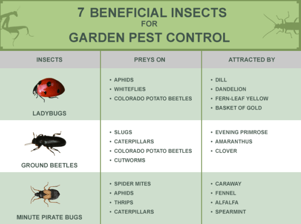 """""""Beneficial"""" Insects act as Alternative to Harmful & Toxic Pesticides"""