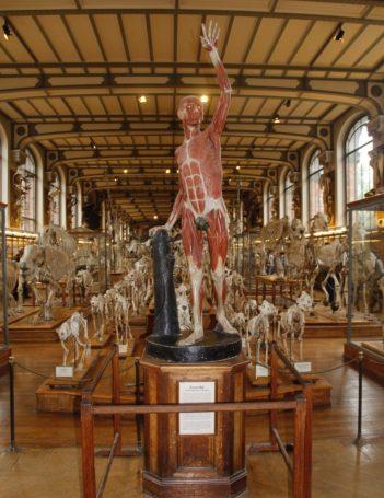 Museu de História Natural de Paris Muséum National d'Historie Naturelle Jardin de Plantes Paris França