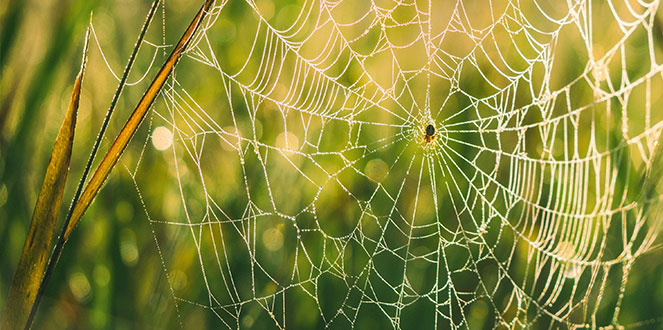 Weaving Together a Web of Intentional Kindness | The Nostalgia Diaries Blog