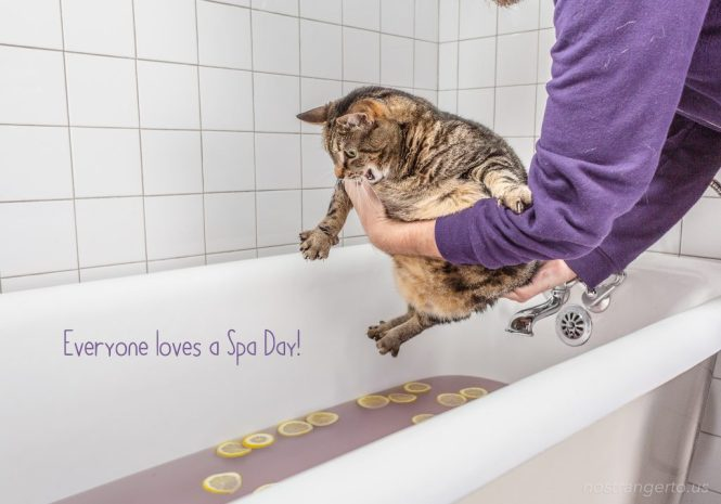Cat held over a bathtub