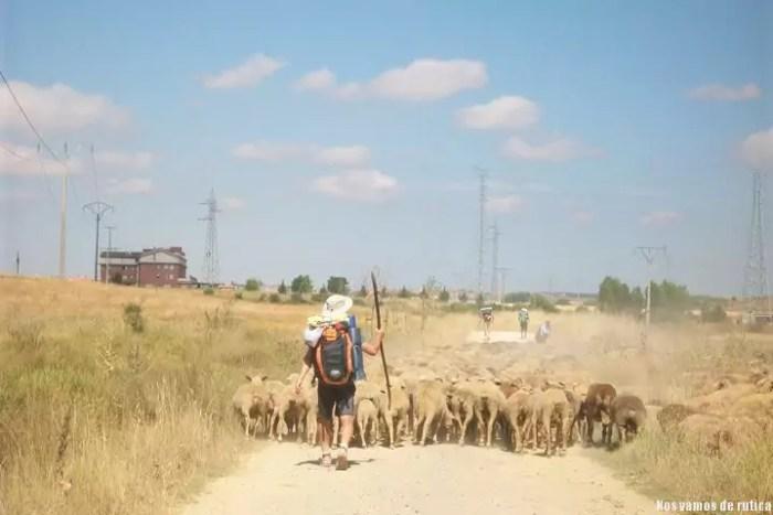 Dani en el camino de Santiago