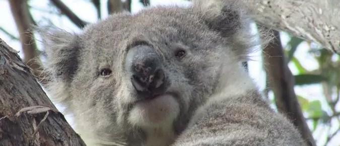 De Melbourne a Sydney (III): Vida salvaje de Isla Raymond