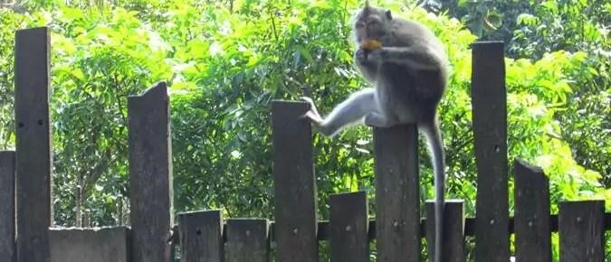 Que ver en Ubud y alrededores: Guia completa