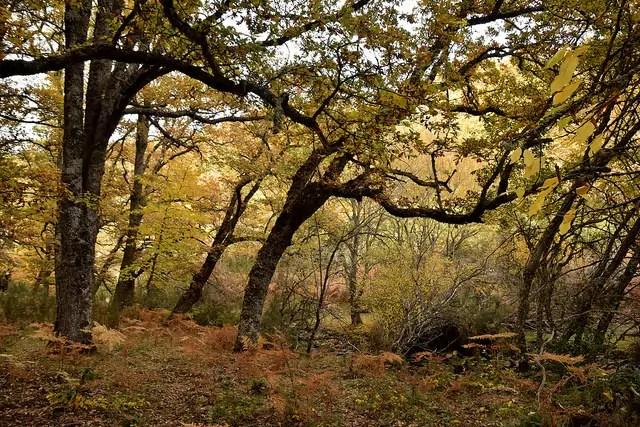 Sierra de Madrid