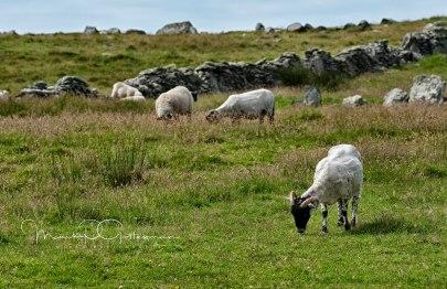 2012Jul19_Ireland_5869