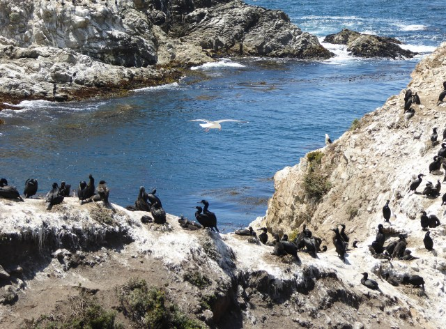 Bird Island Point Lobos State Reserve