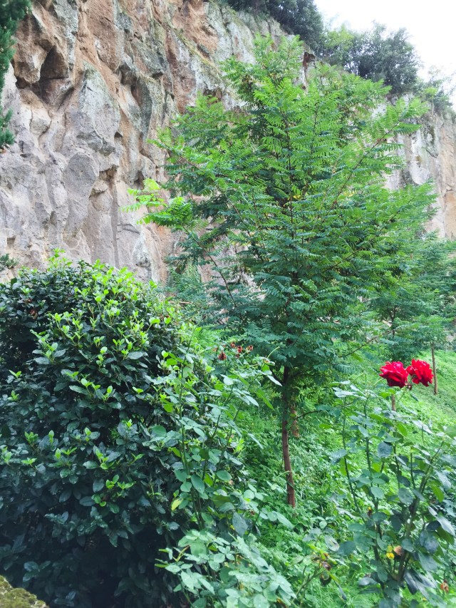 Roses growing along stone wall at the Misia Resort near Orvieto