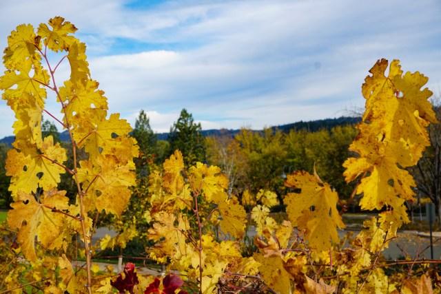 Beringer Vineyards Napa Valley California