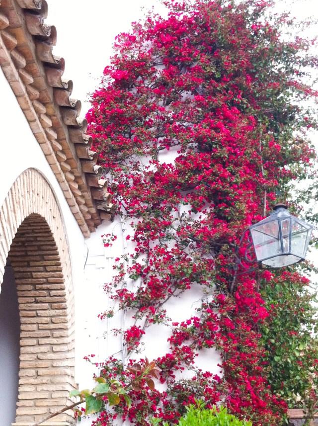 Patio at the Palacio de Viana in Cordoba Spain