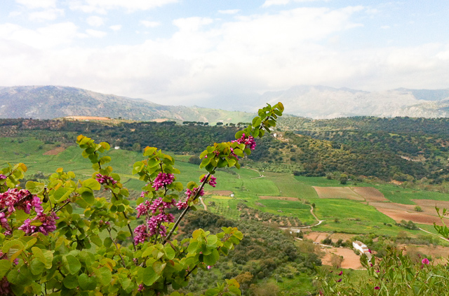 View of the Countryside from Ronda in Andalusia, Spain