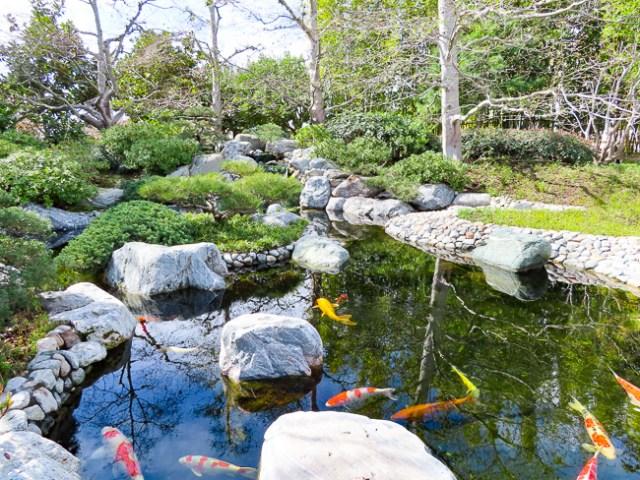 Koi Pond Japanese Garden Balboa Park San Diego California