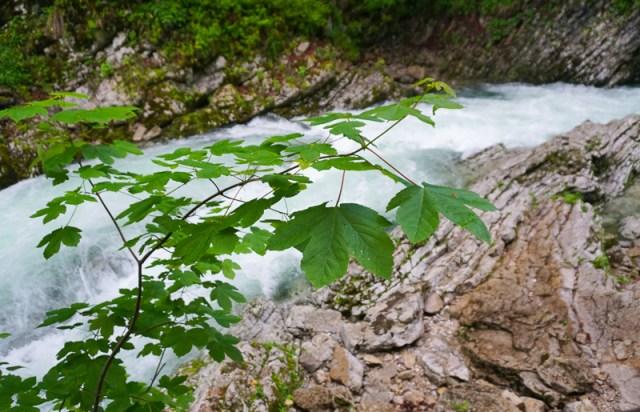 Canyon Walls Vintgar Gorge Slovenia