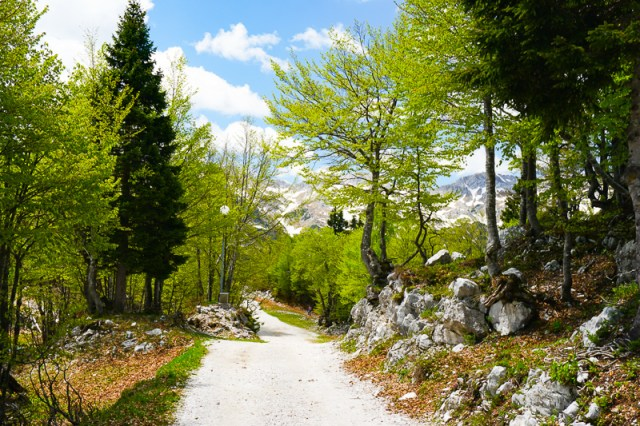 Walking path Mount Vogel Slovenia