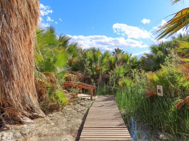Thousand Palms Oasis Coachella Valley Preserve California