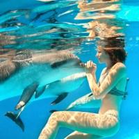 dolphin / human