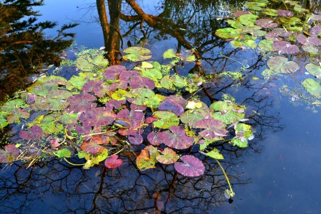 woolley-grange-pond