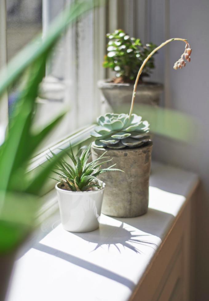 Plants on window ledge