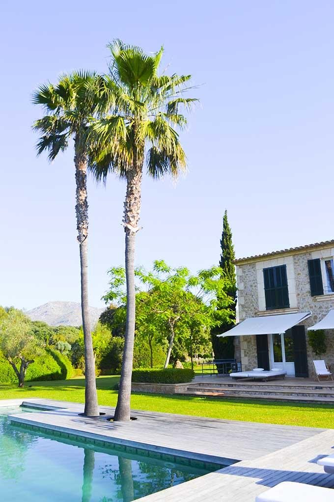 las-palmeras-palm-trees