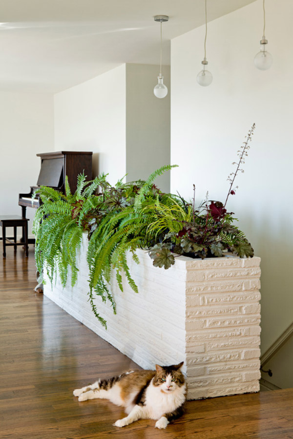 Hanging Indoor House Plants