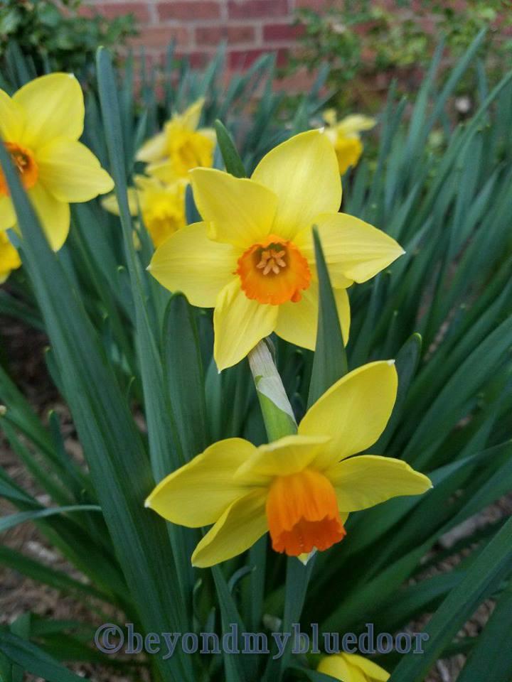 Lent, Easter, 40 Days of Lent, Southeast Christian Church, hope