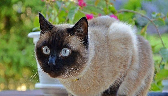 Nombres para gatos en Japones originales y bonitos
