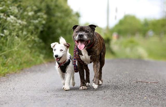 cane cieco cammina con la sua guida