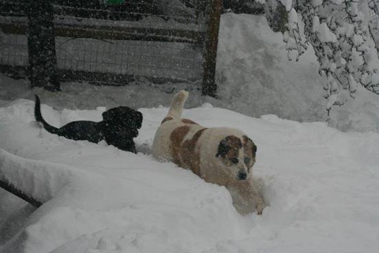 Khaleesi è felice nella neve