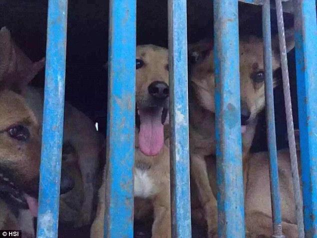 I cani che erano nel camion