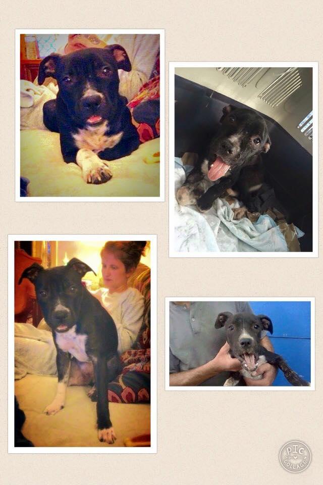Lucy prima e dopo