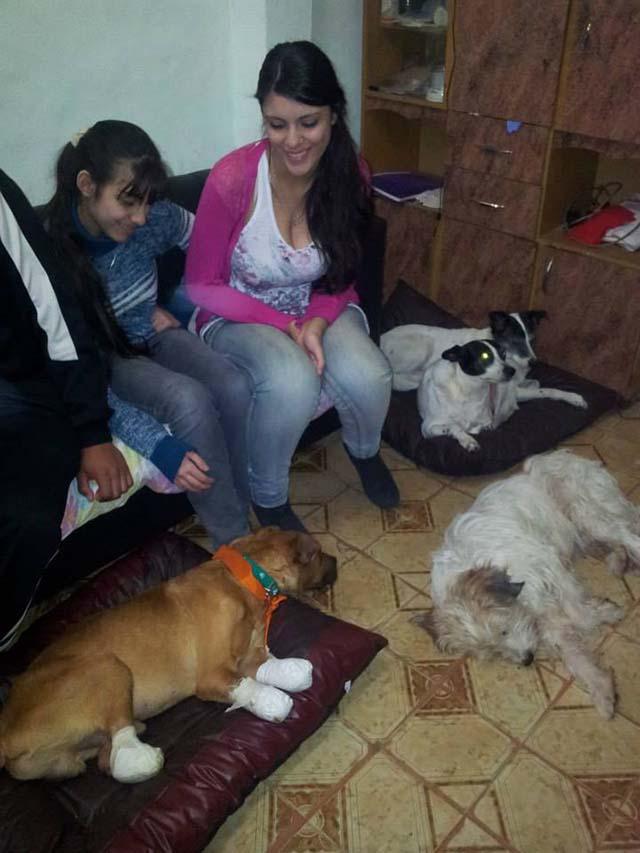 Senza cane a quattro zampe adottato