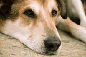 Los perros perdidos nunca dejan de buscar su hogar