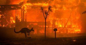 Canguro frente a una casa en llamas en los incendios de Australia en 2019
