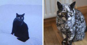Gato se transforma completamente a la edad de 7 años