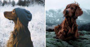 Fotógrafo toma las fotos más hermosas de su perro en sus aventuras