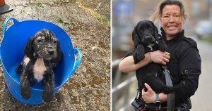 Perrito encontrado en un balde, ahora es perro rastreador de la policía
