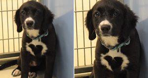 Familia acampa 27 horas para adoptar perrita